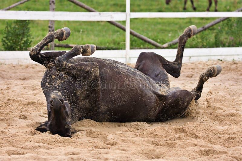 Paard laiyng in zand stock fotografie