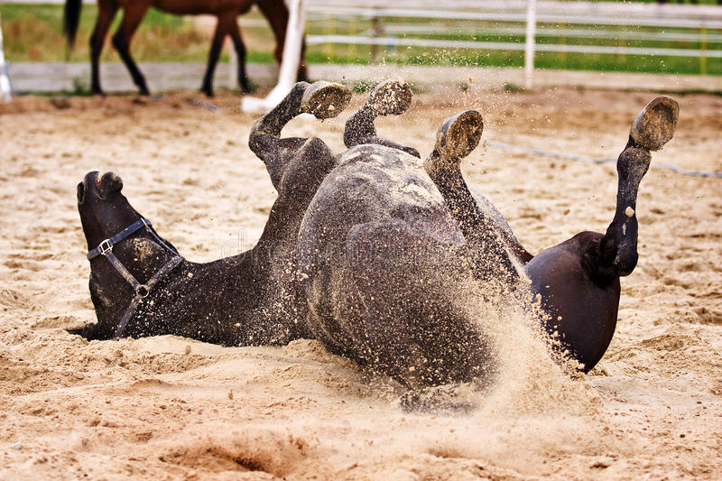 Paard laiyng in zand royalty-vrije stock afbeelding