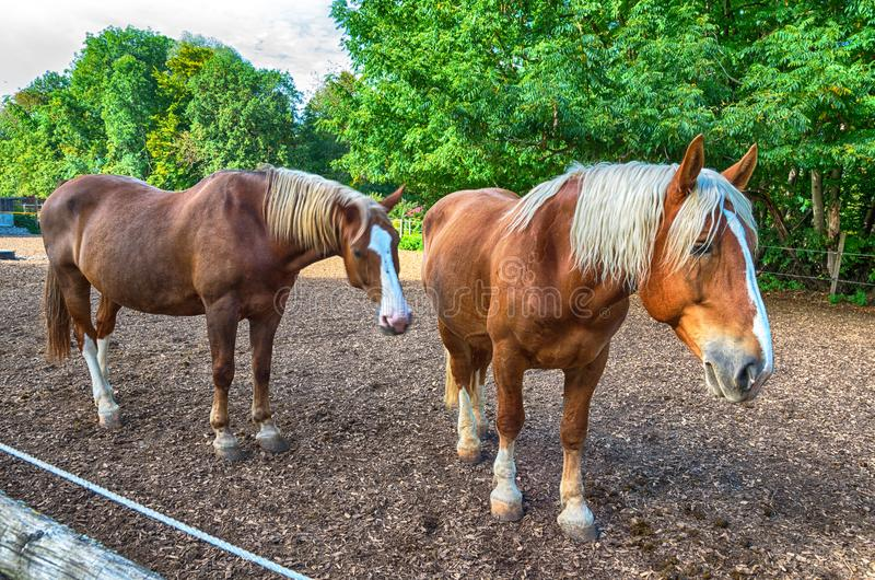 Paard-landbouwbedrijf met ontwerppaarden royalty-vrije stock afbeelding