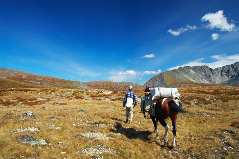 Paard, mensen en blauwe hemel. royalty-vrije stock afbeelding