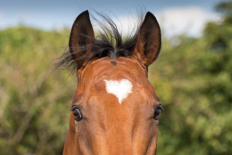 Paard met hart het merken stock afbeeldingen
