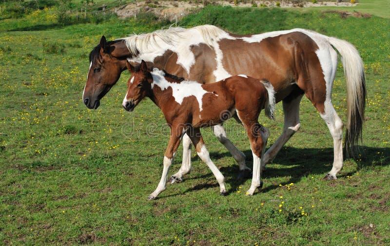 Paard met jong veulen stock foto's