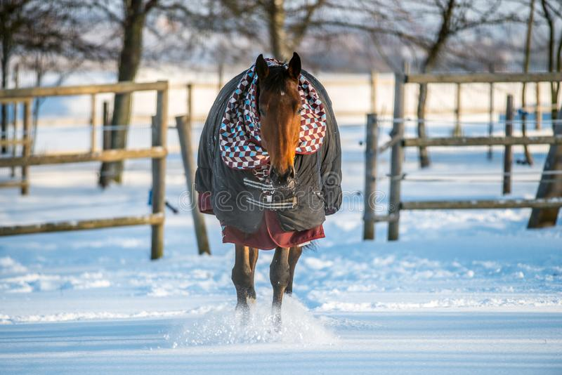 Paard met kleren in wintertijd stock foto