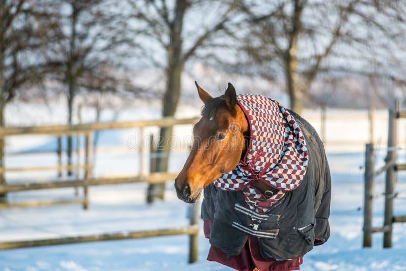 Paard met kleren in wintertijd royalty-vrije stock foto's