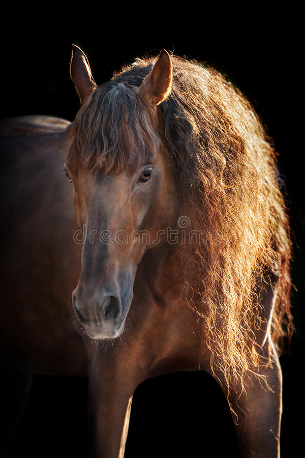 Paard met lange manen op zwarte stock foto