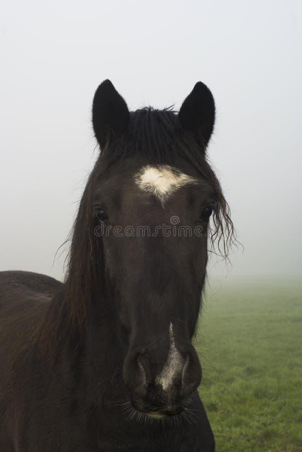 Paard in mist. royalty-vrije stock foto