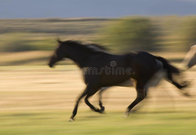 Paard In Motie Stock Afbeelding