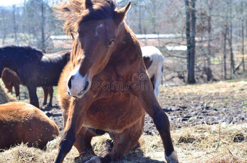 Paard in motie stock fotografie
