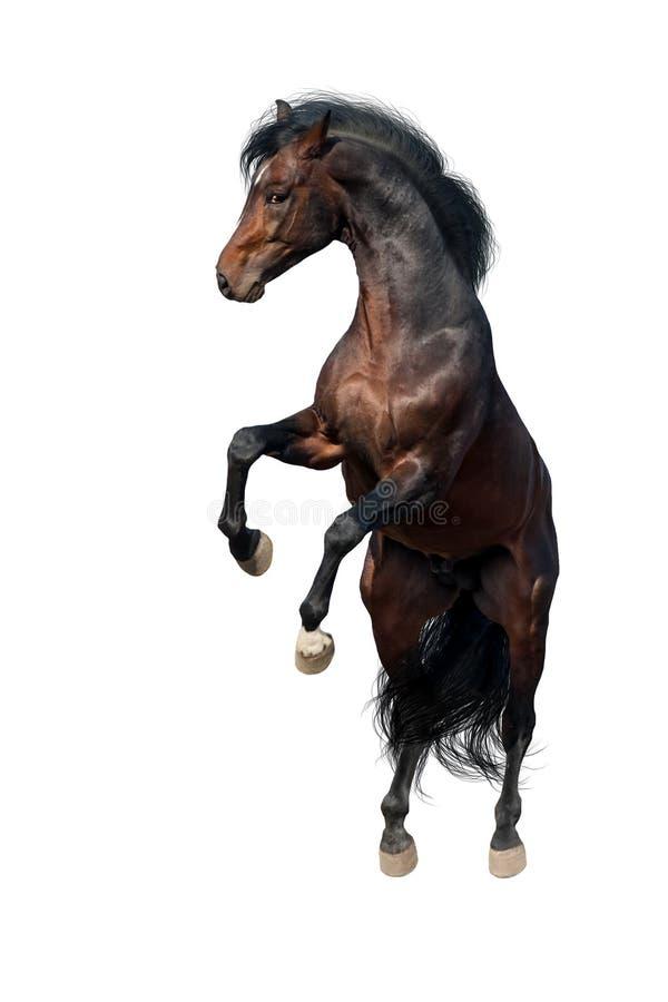 Paard omhoog geïsoleerd grootbrengen royalty-vrije stock afbeelding
