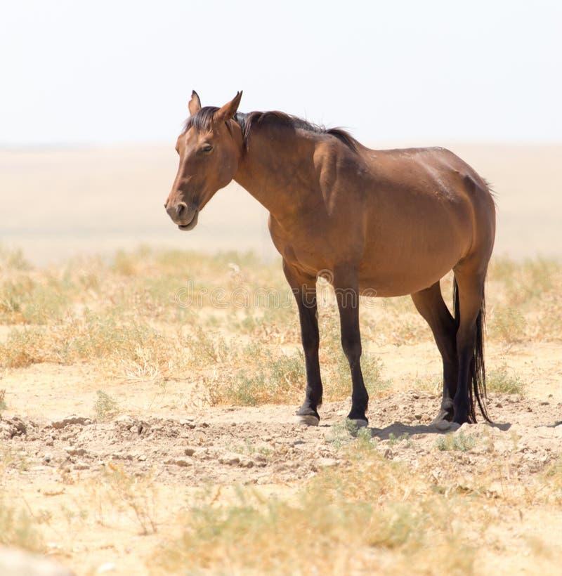 Paard op aard royalty-vrije stock fotografie