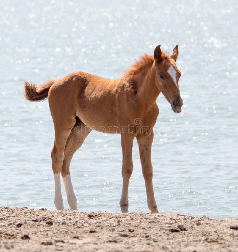 Paard op aard royalty-vrije stock afbeelding