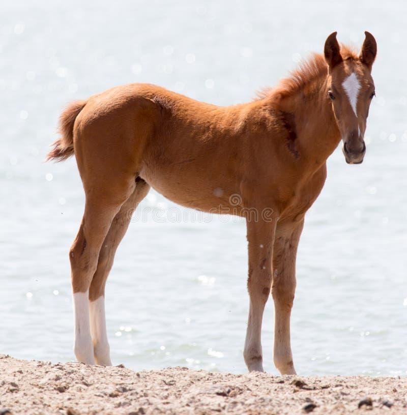 Paard op aard royalty-vrije stock foto's