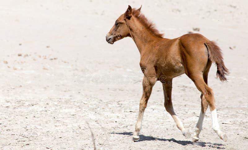 Paard op aard royalty-vrije stock afbeeldingen