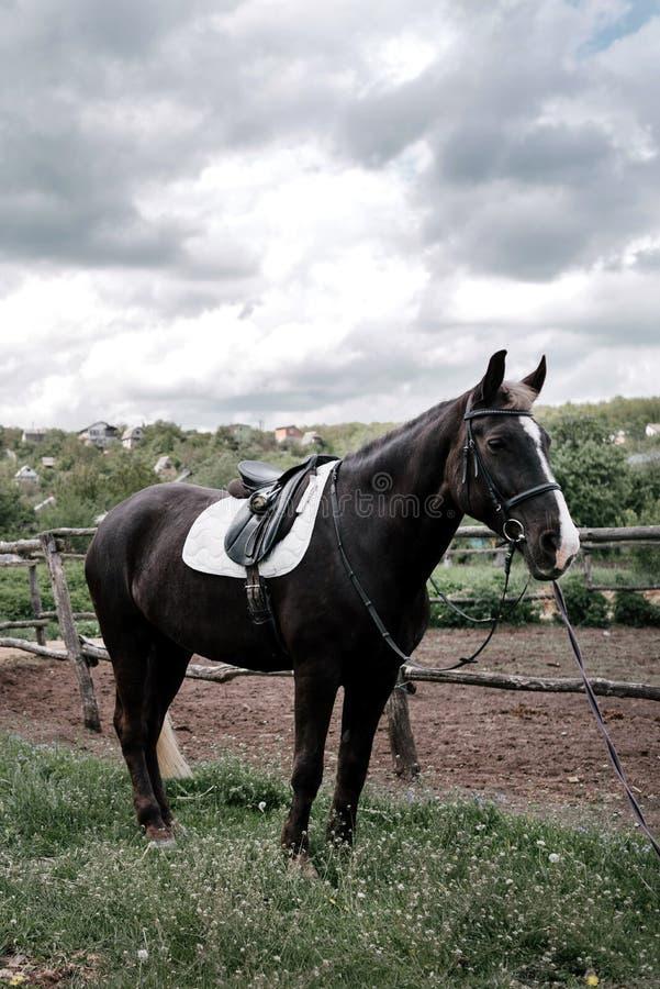 Paard op aard met bewolkte hemel Portret van bruin paard in paddock Het berijden op paard royalty-vrije stock afbeeldingen