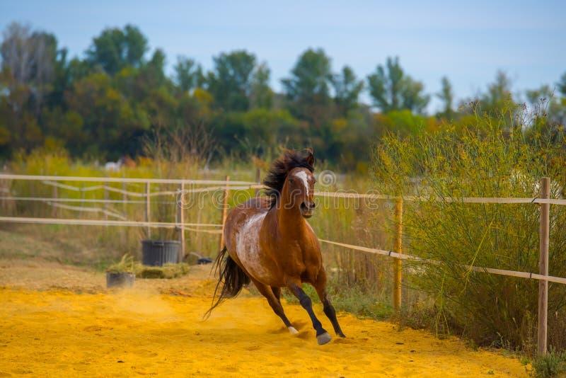 Paard op aard Portret van een paard, bruin paard stock afbeeldingen