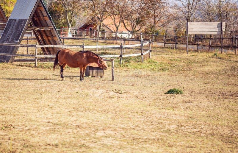 Paard op aard Portret van een paard, bruin paard royalty-vrije stock foto