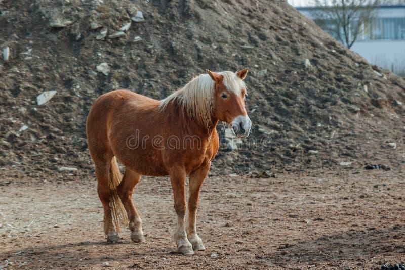 Paard op aard Portret van een paard, bruin paard royalty-vrije stock fotografie