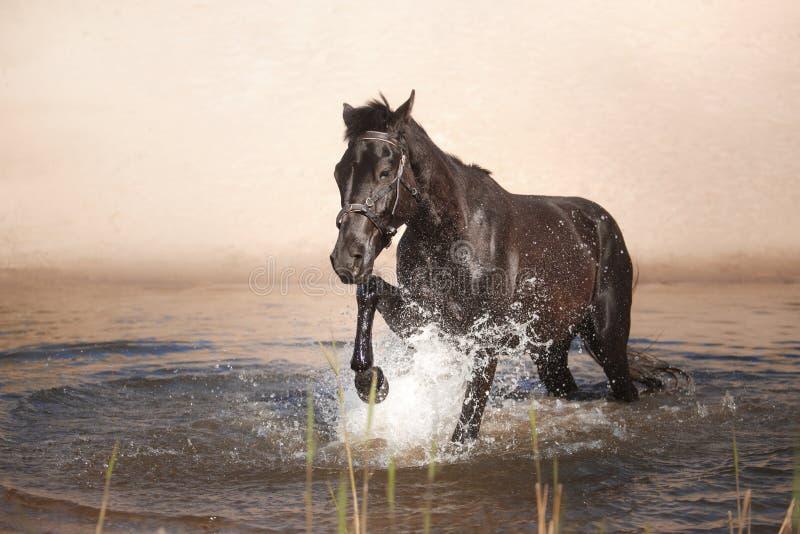 Paard op aard Portret van een paard, stock afbeeldingen