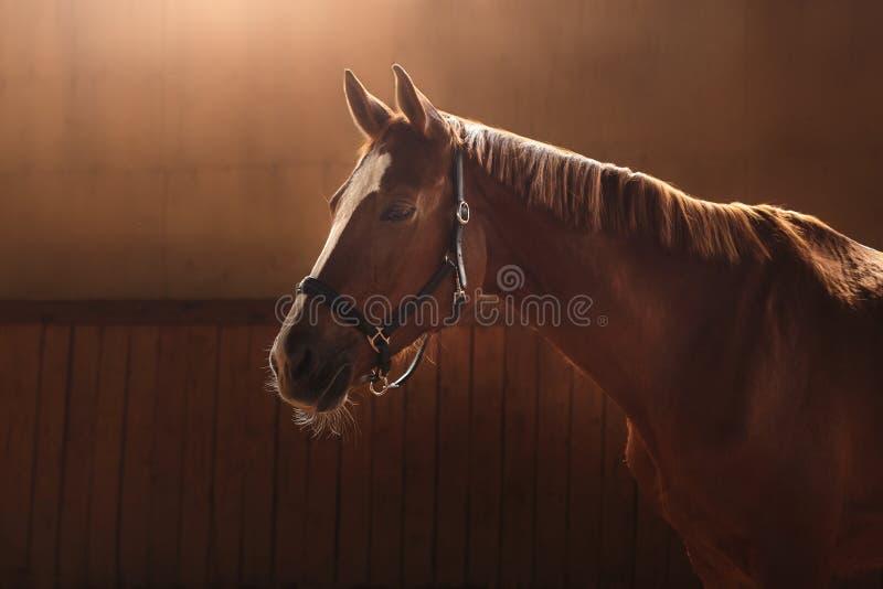 Paard op aard Portret van een paard, bruin paard royalty-vrije stock afbeeldingen