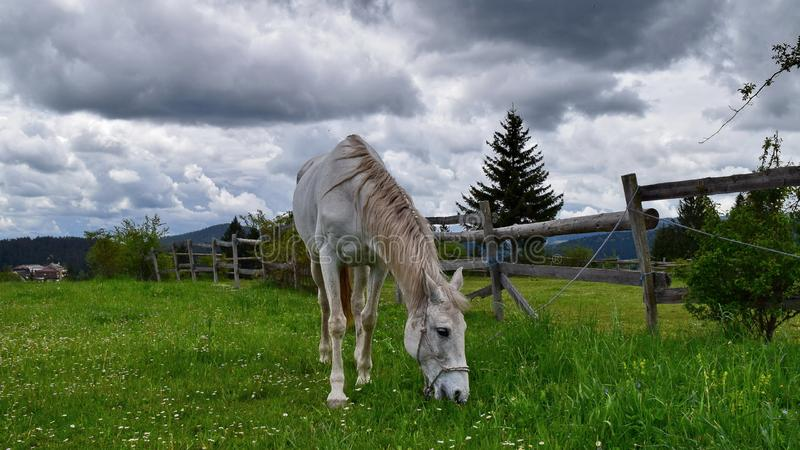 Paard op de berg stock foto