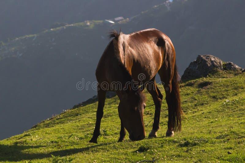 Paard op de bergen royalty-vrije stock foto's