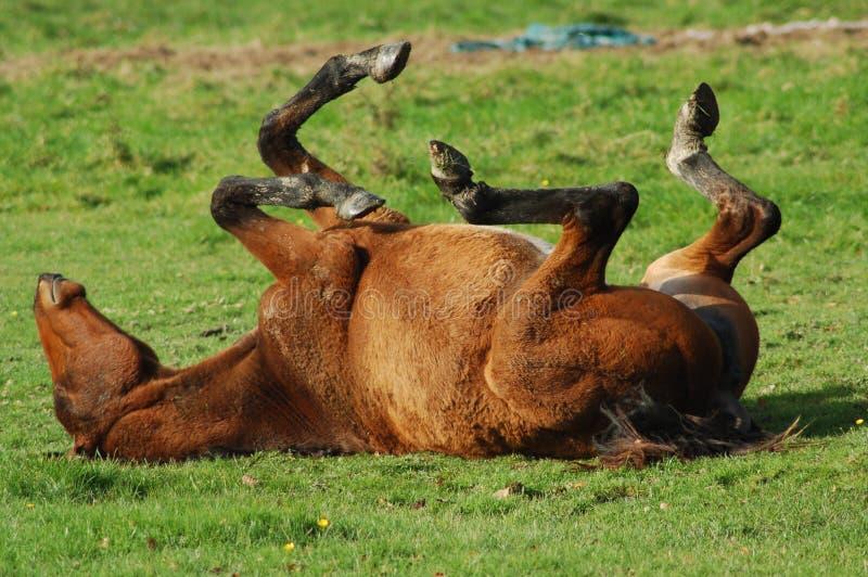 Paard op de rug royalty-vrije stock afbeeldingen