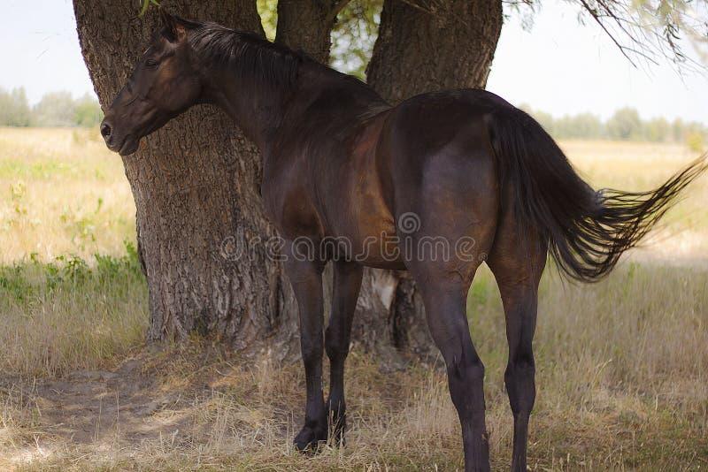 Paard op een de zomerdag in een weide royalty-vrije stock afbeelding
