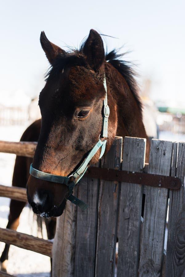 Paard op een landbouwbedrijf achter een houten omheining stock fotografie