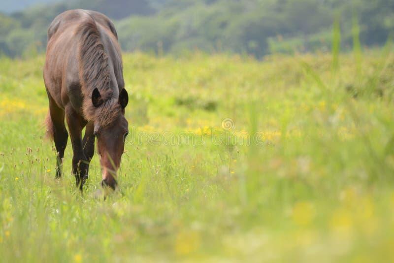 Paard op gebied royalty-vrije stock afbeelding