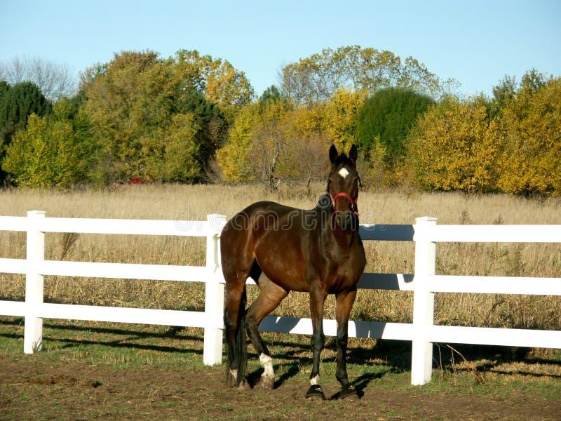 Paard op gebied in daling royalty-vrije stock afbeelding