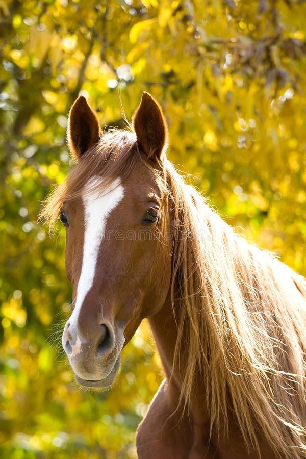Paard op geel royalty-vrije stock afbeeldingen