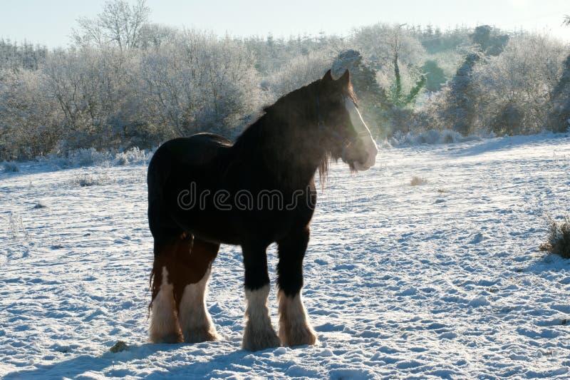 Paard op het de wintergebied royalty-vrije stock fotografie