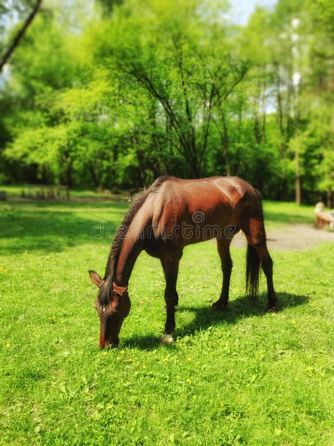 Paard op het gazon royalty-vrije stock fotografie