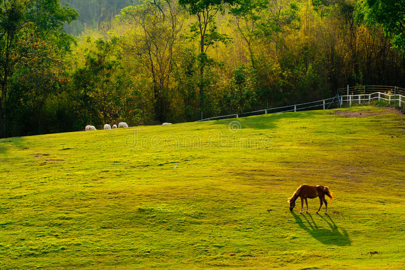 Paard op het gebied. stock fotografie