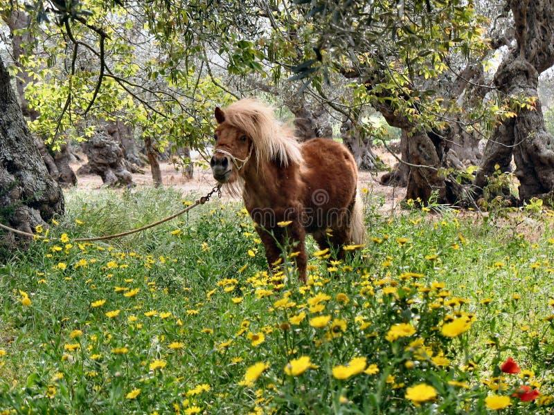 Paard op het gebied stock foto