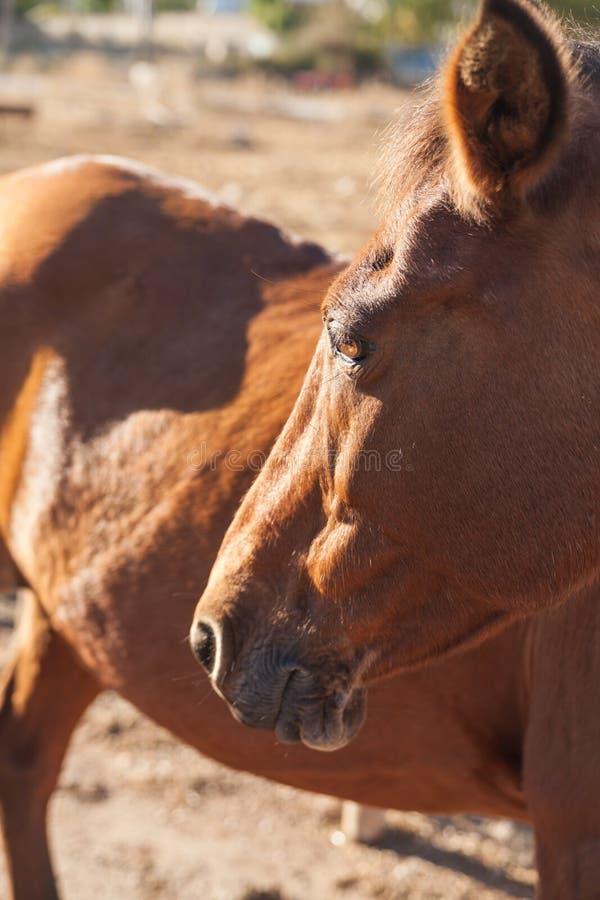 Paard op het landbouwbedrijf stock afbeelding