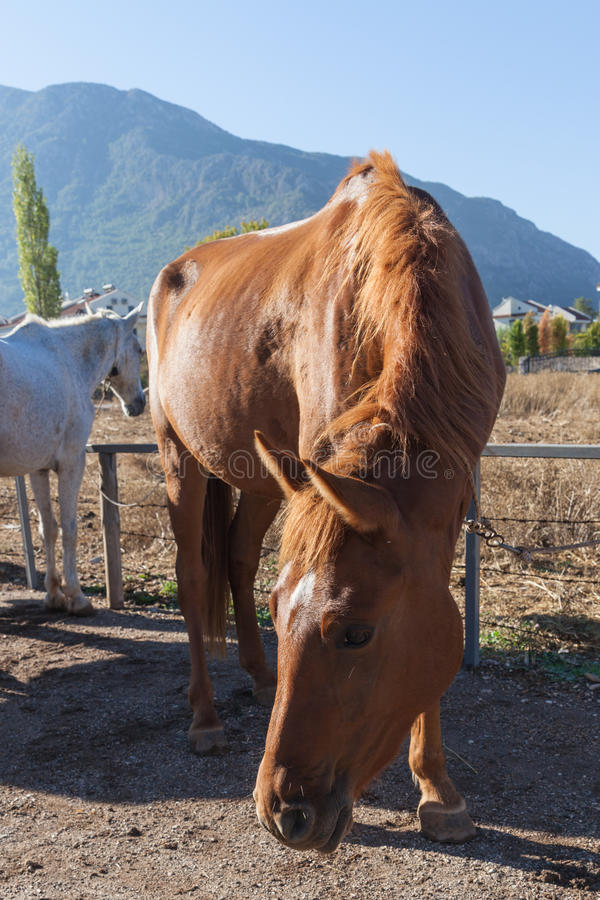 Paard op het landbouwbedrijf royalty-vrije stock foto's