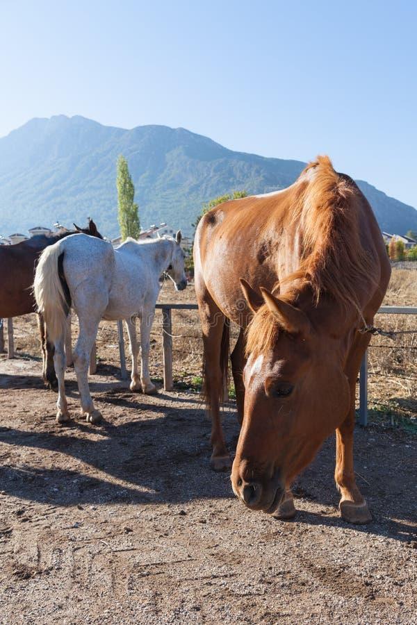 Paard op het landbouwbedrijf royalty-vrije stock afbeelding