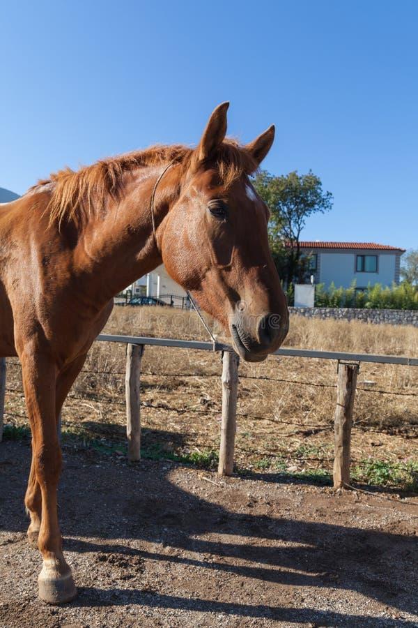 Paard op het landbouwbedrijf royalty-vrije stock foto