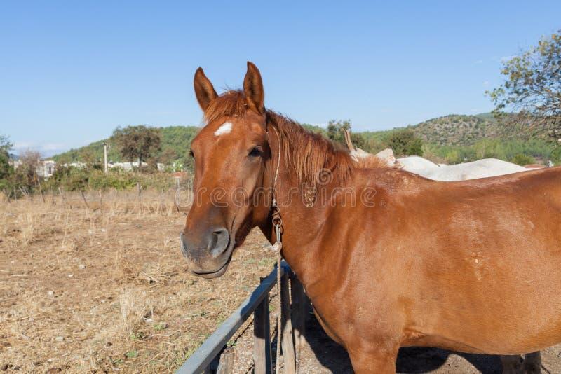 Paard op het landbouwbedrijf stock foto