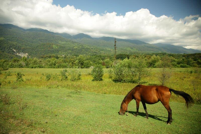 Paard op het weiland royalty-vrije stock foto's