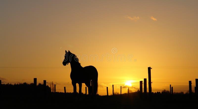 Paard op horizon backlit door zonsondergang stock fotografie