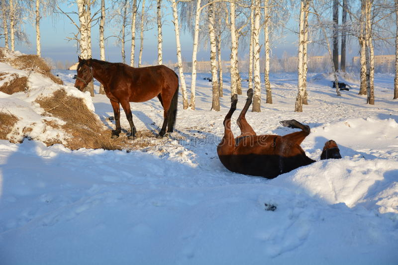 Paard op sneeuw royalty-vrije stock afbeeldingen