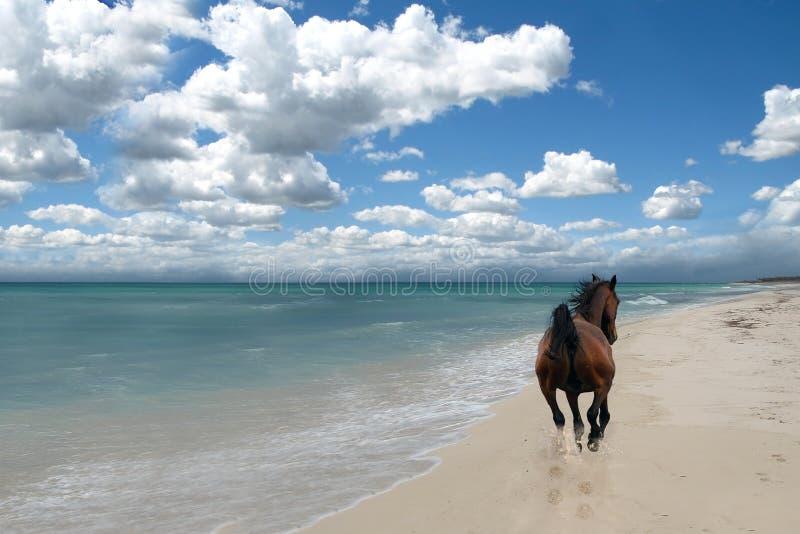 Paard op strand royalty-vrije stock fotografie