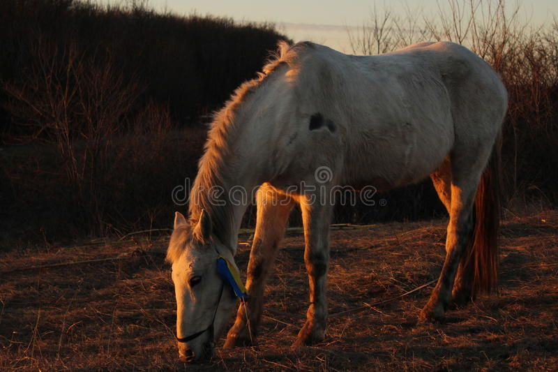 Paard op weiland stock foto