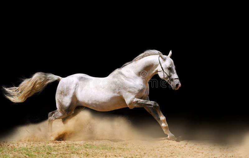 Paard Op Zwarte Royalty-vrije Stock Fotografie
