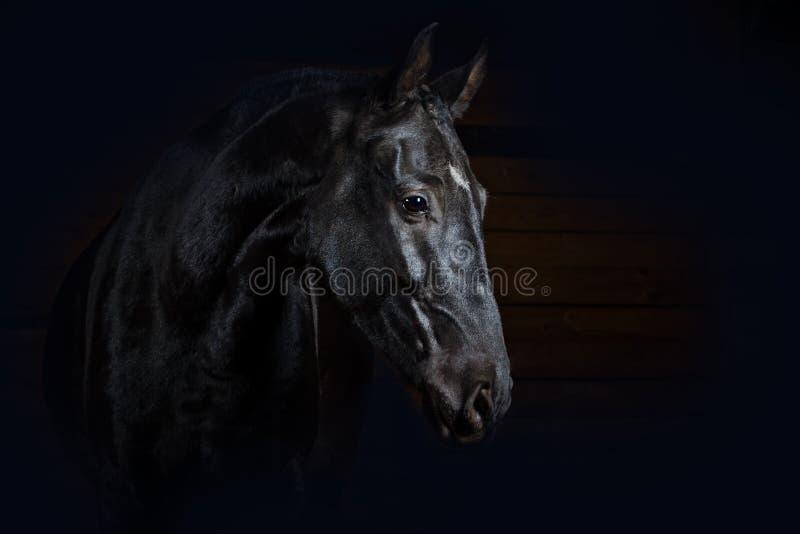 Paard op zwarte stock foto's