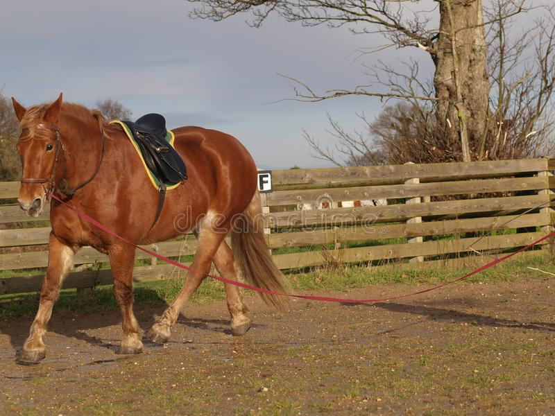 Paard in Opleiding royalty-vrije stock afbeeldingen