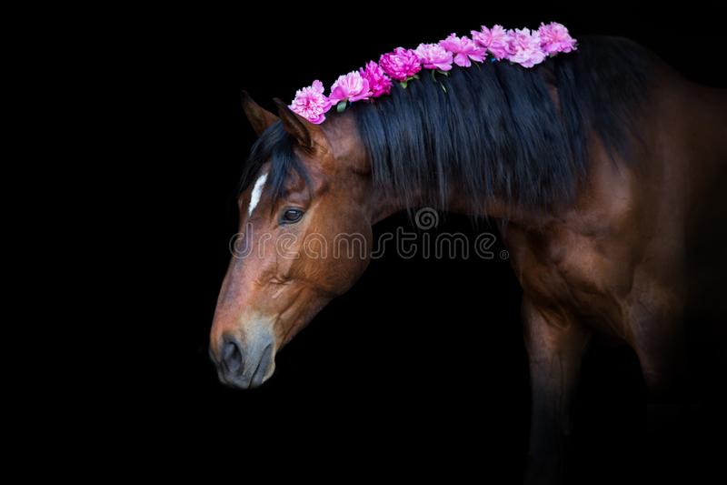Paard in pionen stock fotografie