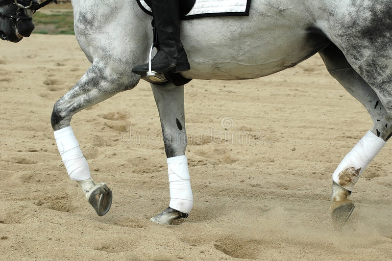Paard ridng stock foto's